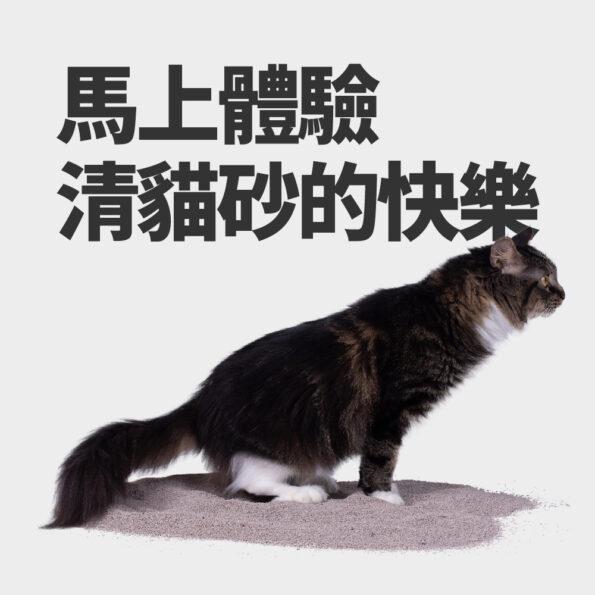 清貓砂 里德 貓砂