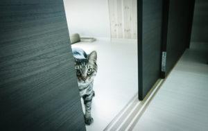 cat peak toilet litter