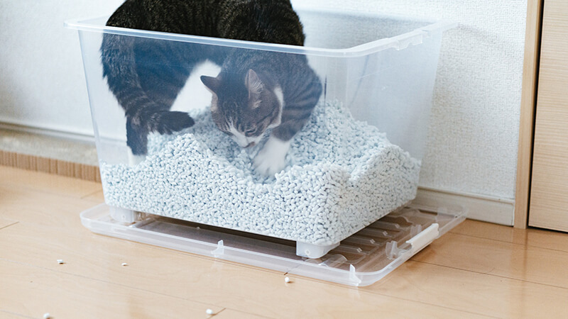 貓砂全種類知識懶人包