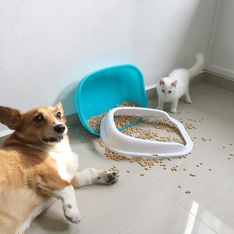 推薦哪一種貓砂