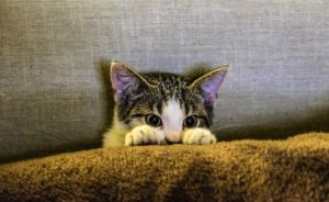 貓 好奇 偷看