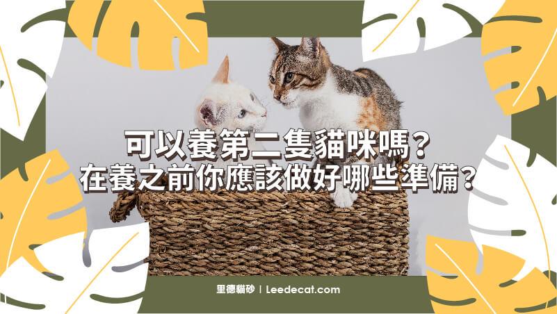 可以養第二隻貓咪嗎?在養之前你應該做好哪些準備