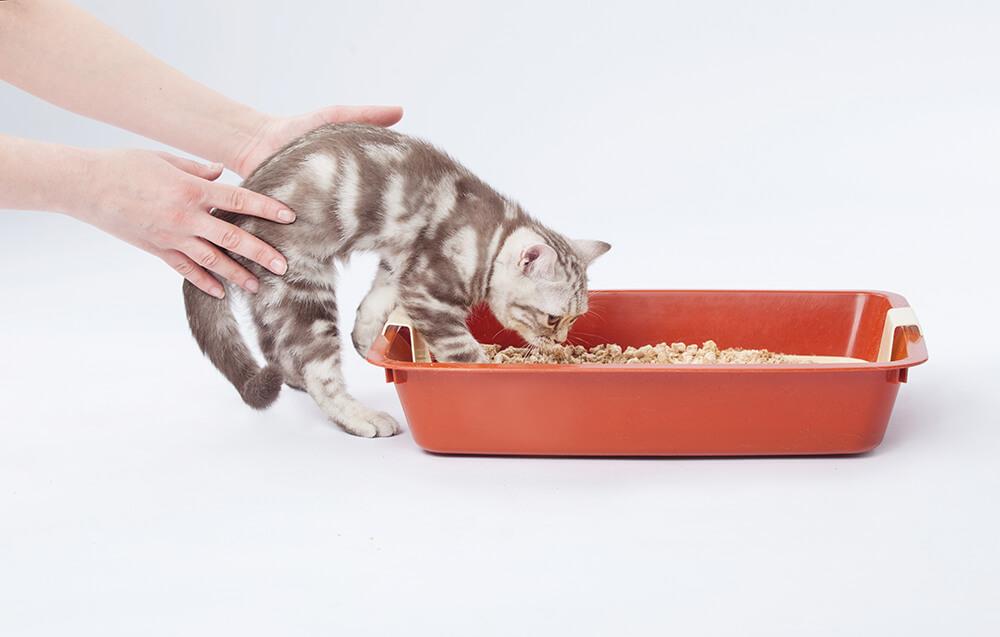挑出CP值推薦評價高的貓砂