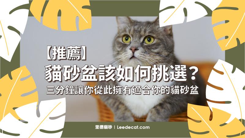 貓砂 推薦