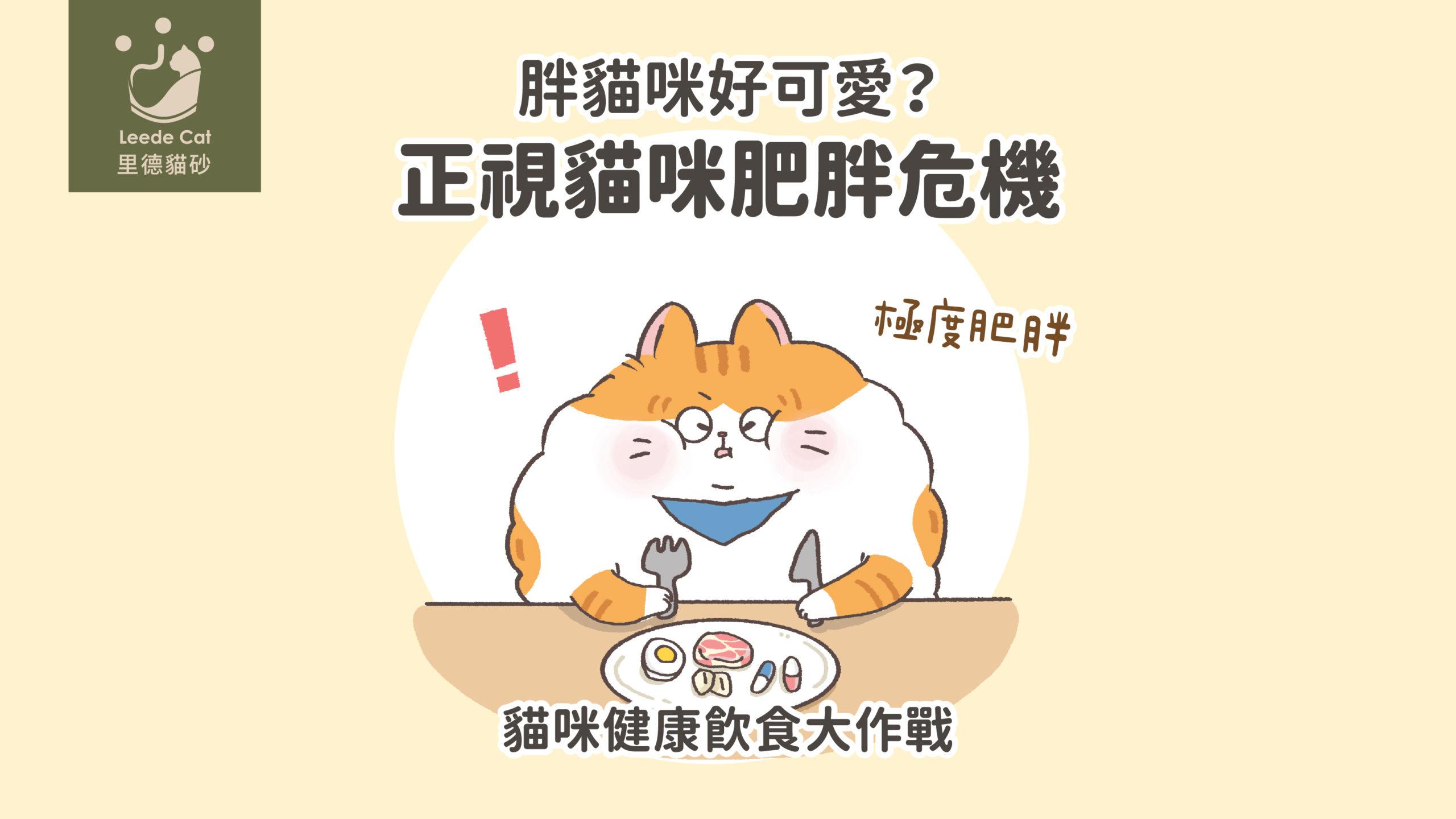 貓咪肥胖健康飲食