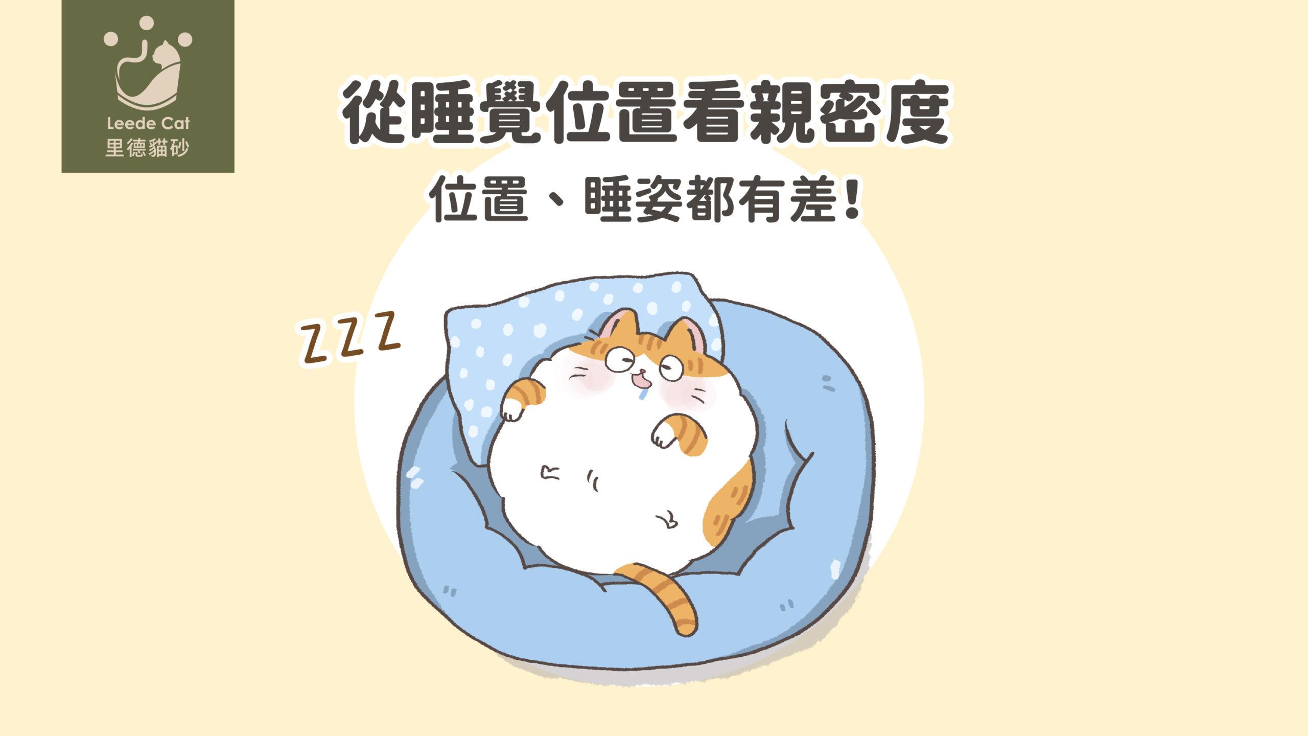 貓咪睡覺位置